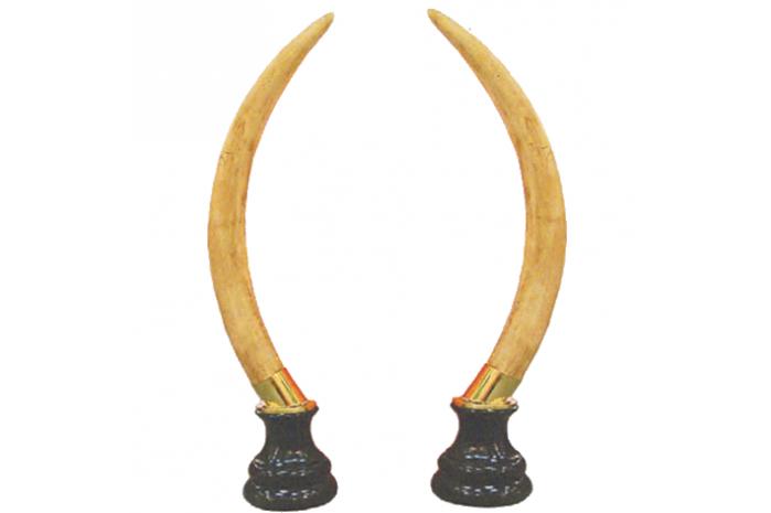 942059  Colmillos Elefante Encasquillado 155x17cm