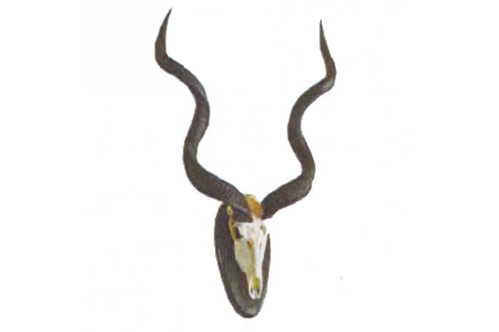942065  Gran Kudu 130x70